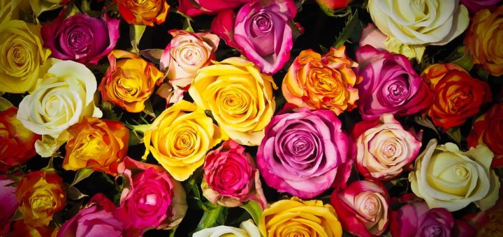 kwiaciarnia Dębica